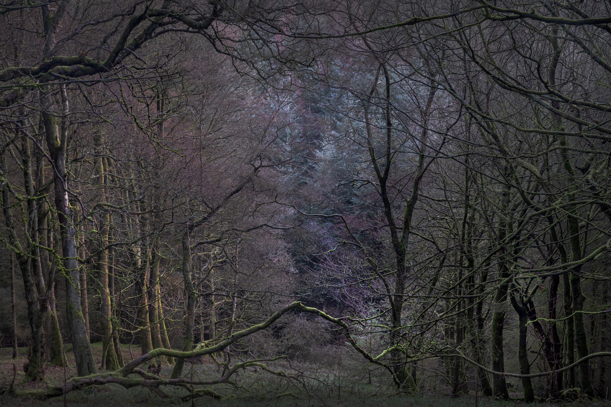 MACCLESFIELD FOREST